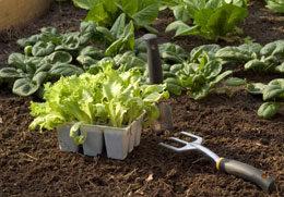 Soils, Conditioners & Composts