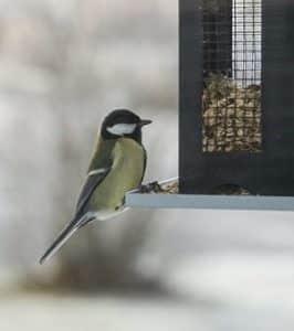 mulch suffolk, bird feeder