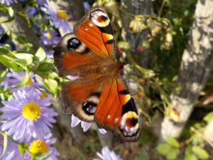 garden mulch suppliers suffolk, butterfly